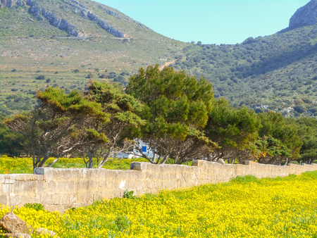 favignana: Blooming spring meadow on the island. Favignana, Sicily