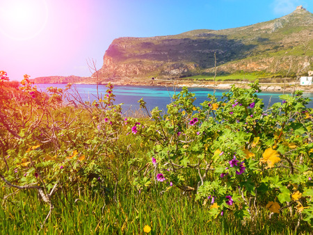 egadi: Spring flowers on the cliffs of the Mediterranean Sea Stock Photo