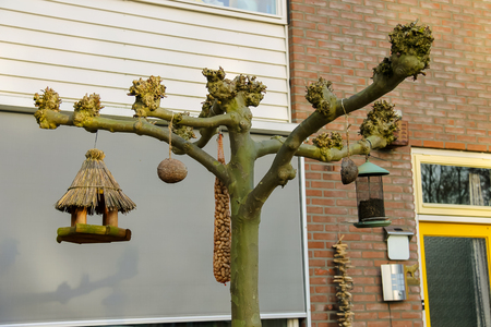 feeders: Bird feeders in a spring Dutch town