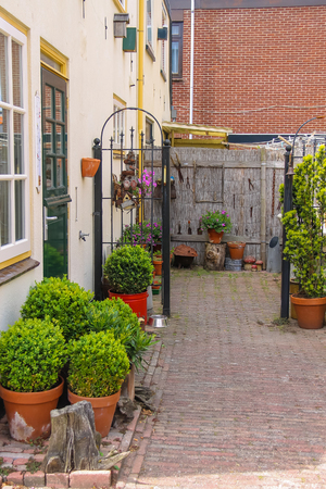traditional plants: Street view of traditional house decorated with plants and flowers in Zandvoort, the Netherlands