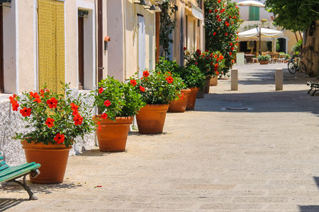 flower in pot: Decorative pots with red hibiscus flowers on the street of Italian town on Elba Island Stock Photo
