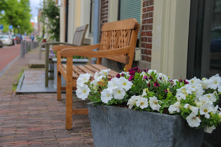 traditional plants: Traditional Dutch wooden benches surrounded by decorative plants on the city street