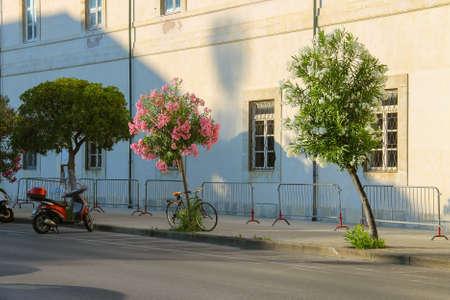 viareggio: Parked bicycle and motorbike on the street in Viareggio, Italy
