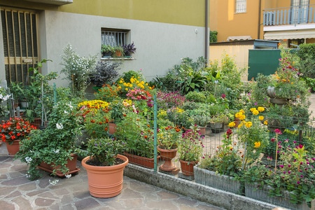 Small ornamental garden with flower pots near the house Фото со стока