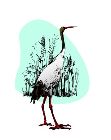 illustration of a young crane in the style of hand drawing