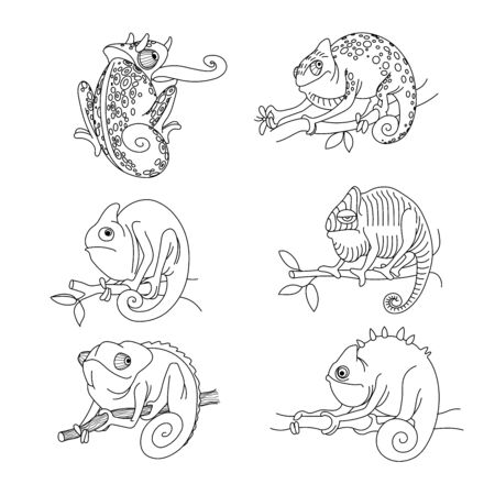 set of funny cute phlegmatic chameleons on a branch with leaves, emotion, indifference, calm, illustration with black contour lines isolated on white background in hand drawn style