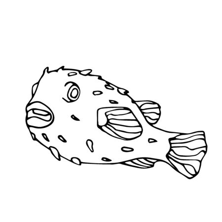 dangerous, poisonous, exotic, delicious puffer fish with spikes, vector illustration with black contour lines isolated on white background in Doodle and hand drawn style Ilustrace