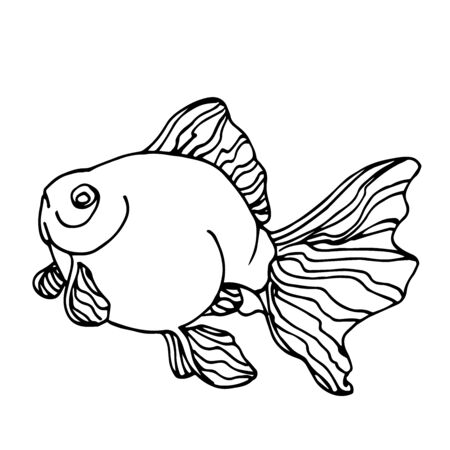 decorative aquarium Golden fish, Chinese crucian, symbol of good luck, vector illustration with black contour lines isolated on white background in Doodle and hand drawn style