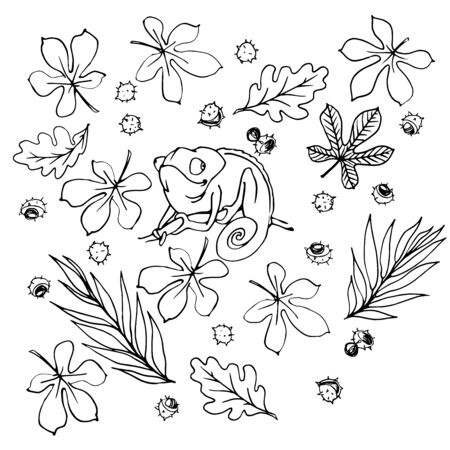 black and white floral set of chestnut, oak, willow tree leaves with chameleon, ink and contour lines isolated on white background in hand drawn style