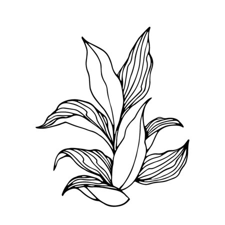 Tobacco bush with leaves, agricultural plant, vector illustration with black contour lines isolated on a white background in the style of doodle and hand drawn