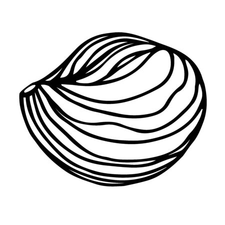 peeled hazelnut kernel, element of decorative ornament or pattern 일러스트
