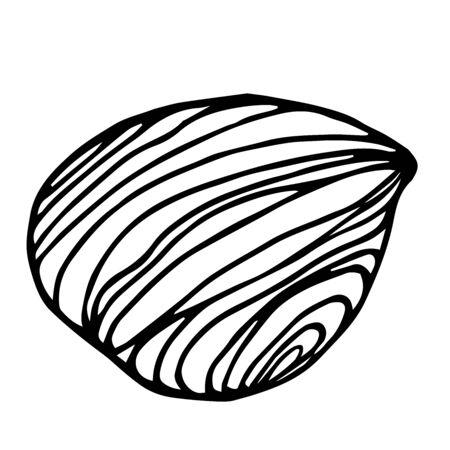 peeled hazelnut kernel, element of decorative ornament or pattern