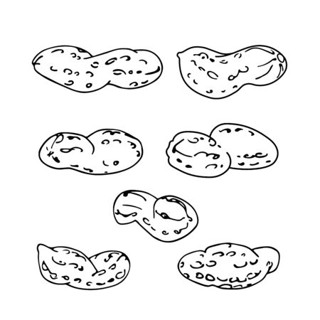 set of peanuts in shell, element of decorative ornament or pattern, vector illustration with black contour lines isolated on white background in doodle and hand drawn style