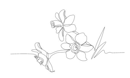 bouquet of narcissus flowers, symbol of spring, youth, easter, ornament, pattern for wedding postcards, vector illustration with black single thin contour line isolated on white background