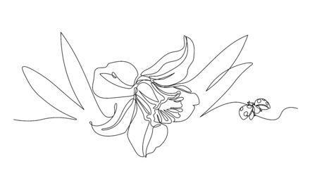einzelne Narzissenblume mit Blättern und Marienkäfer, Symbol für Frühling, Jugend, Ostern, Ornament und Muster für Hochzeitskarten, Vektorillustration mit schwarzer einzelner Konturlinie isoliert auf weißem Hintergrund