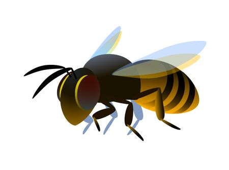 single flying worker honeybee, logo or emblem, symbol of the collective unit, color vector illustration isolated on a white background in cartoon or clip art style