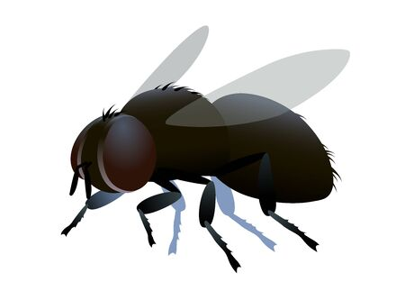 single dirty brown ugly dung fly with bristles & faceted eyes, or emblem, infection symbol, color vector illustration isolated on a white background in cartoon or clip art style