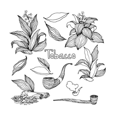 set of tobacco bushes with leaves, smoking pipes, agricultural plant, vector illustration with black ink contour lines isolated on a white background in doodle and hand drawn style
