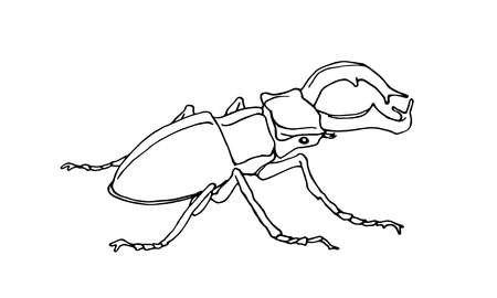 decorative stag beetle, lucanus male with horns, rare european insect, vector illustration with black contour lines isolated on a white background in hand drawn style