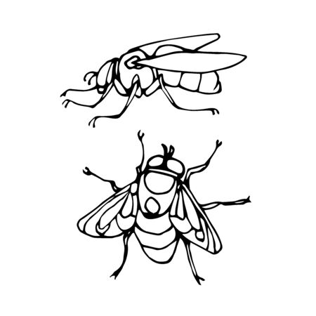 set of a dirty ugly dung fly, for logo or icon, infection symbol, vector illustration with black ink contour lines isolated on a white background in doodle & hand drawn style