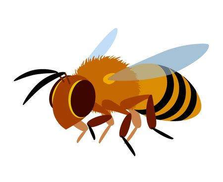 single flying worker honeybee, logo or emblem, symbol of the collective unit, color vector illustration isolated on a white background in cartoon & flat style