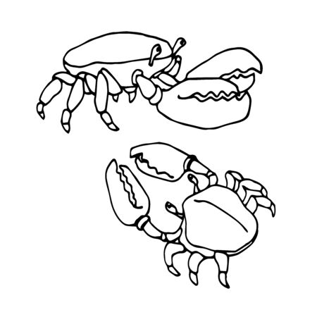 set of funny coastal crabs with claws, for decorative ornaments & patterns, vector illustration with black ink contour lines isolated on white background in doodle & hand drawn style Stock Illustratie