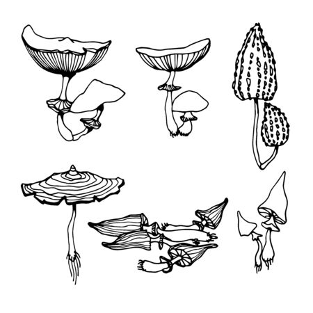 set of a forest poisonous fungus, toadstools, ingredient for magical antidote, potions, medical drugs, vector illustration with black contour lines isolated on a white background in hand drawn style Vecteurs