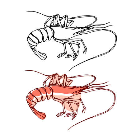 pink sea shrimp, for menu decoration, delicious seafood, vector illustration with black ink contour lines isolated on white background in doodle & hand drawn style