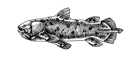prehistoric sea fish, coelacanth, deep water ancient animal, dinosaur, vector illustration with black ink lines isolated on a white background in hand drawn style Vettoriali