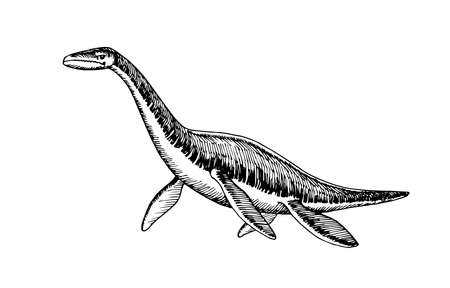 prehistoric reptile of the Jurassic period, giant plesiosaur with fins, sea raptor, vector illustration with black ink lines isolated on a white background in a hand drawn style