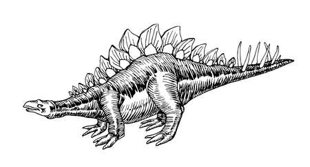 prehistoric Jurassic reptile, herbivorous stegosaurus dinosaur with a crest & spines on its tail, vector illustration with black ink lines isolated on a white background in a hand drawn style
