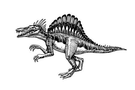 prehistoric reptile of the Jurassic period, giant carnivorous dinosaur spinosaurus, raptor, vector illustration with black ink lines isolated on a white background in a hand drawn style
