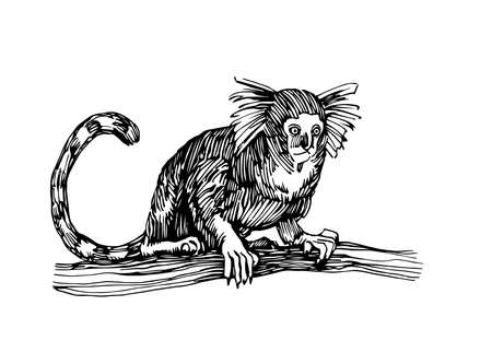 marmoset monkey sitting on a branch, funny smart pet with an emotional face, vector illustration with black ink lines isolated on a white background in a hand drawn style