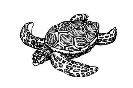 swimming sea turtle in a shell with ornament, for logo or emblem, vector illustration with black ink lines isolated on a white background in a doodle & hand drawn style