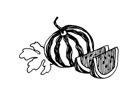 garden plant, sweet fruit, watermelon with slices & leaves, season food, vector illustration with black ink contour lines isolated on a white background in a doodle & hand drawn style
