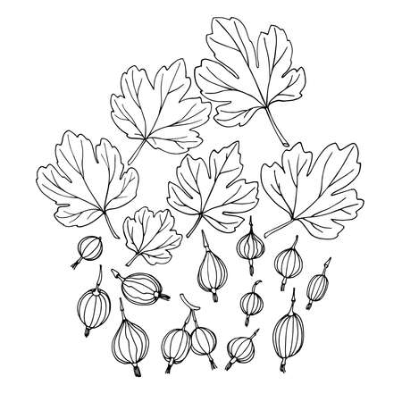 set of gooseberries with leaves, elements of decorative ornament or pattern, vector illustration with black ink contour lines isolated on a white background in doodle & hand drawn style