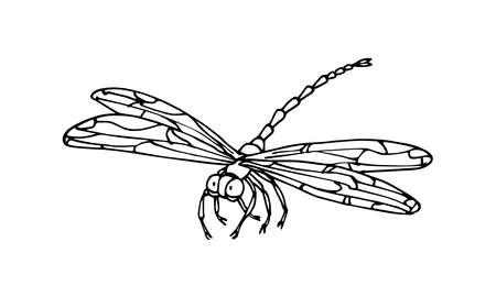 decorative dragonfly, invertebrate insect, funny character, vector illustration with black ink contour lines isolated on a white background in hand drawn style Vettoriali