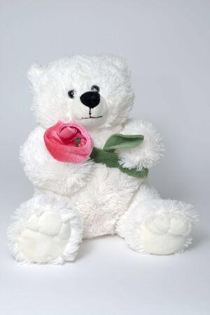 white toy bear holding red rose in arms
