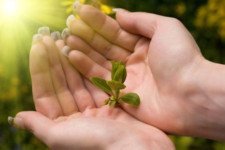 green plant in female's hand with sunlight Stockfoto