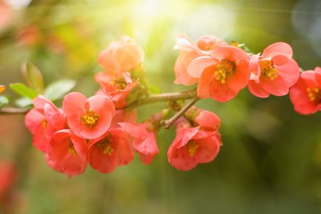 spring red flowers background with sunlight