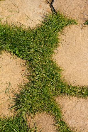 viability: green grass growing through stone.Stone pavement background