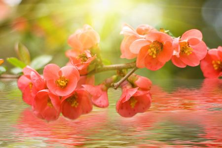 spring red flowers background with sunlight and water reflection