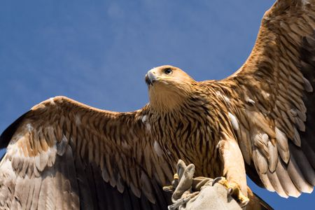 eagle flying over blue sky Stock Photo - 5039789
