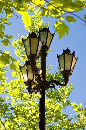 streetlamp and maple leaves over blue sky photo