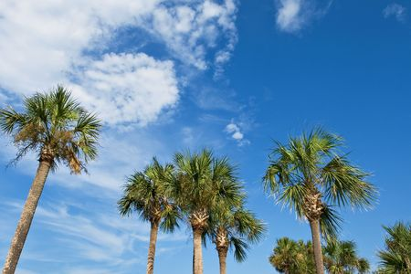 palm trees over blue sky. background photo