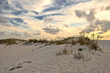 sawgrass: Sand dune at sunset time
