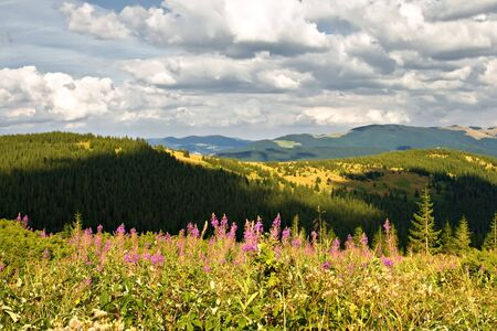 Mountain landscape with green hills and flowers photo