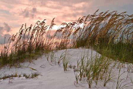 모래 언덕과 붉은 석양 하늘 아래 목초