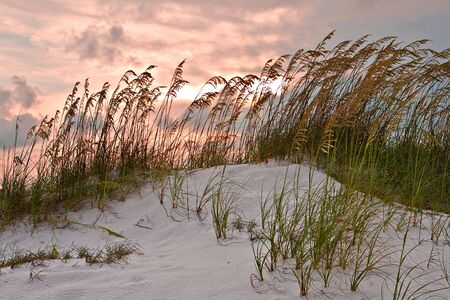 sawgrass: Sand dune and grasses under red sunset sky Stock Photo