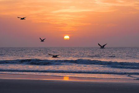 gaviota: Puesta de sol en el Océano Atlántico. Florida, Estados Unidos